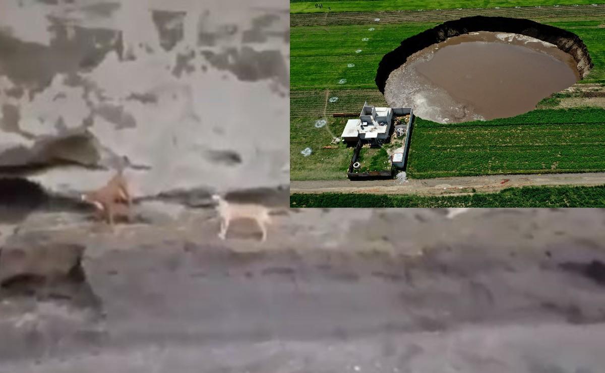 Descartan rescate aéreo y terrestre de perritos en socavón de Puebla, video los captó vivos y ladrando