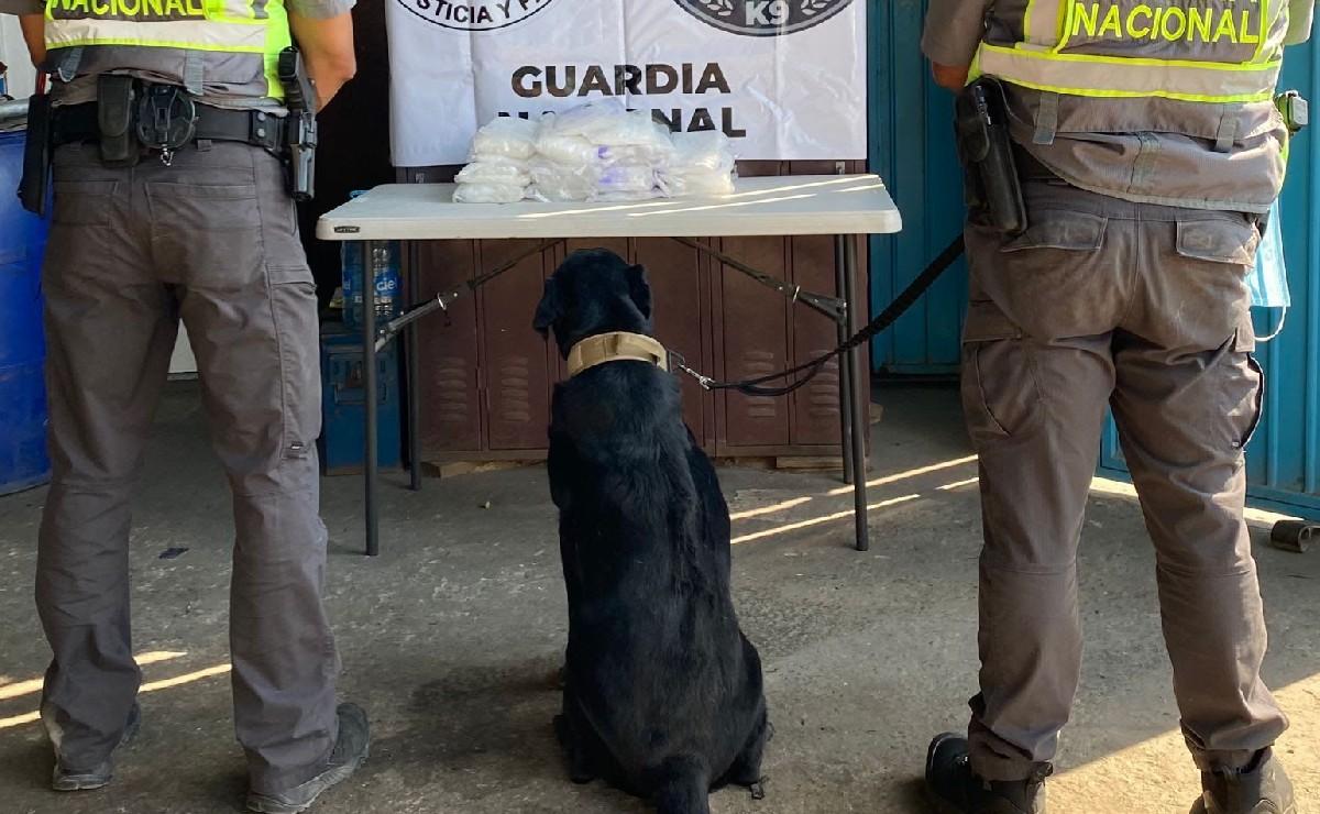 Perro especialista en drogas y armas delata 9 kilos de metanfetamina en Tijuana