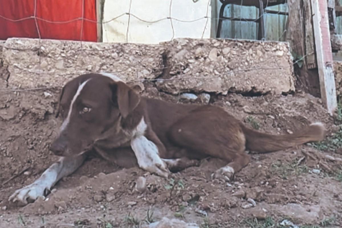 ¡Como Hachiko! Cuchufleto espera el regreso de su dueño, un minero que murió en Coahuila
