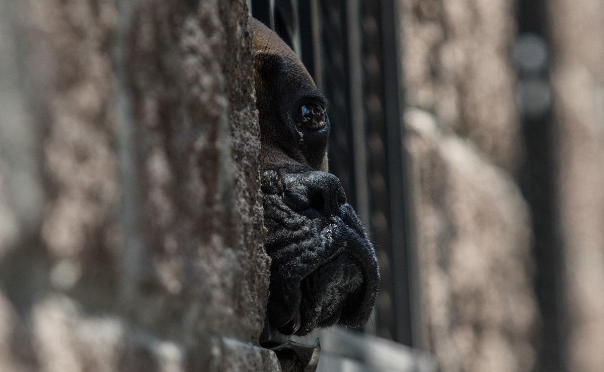 Activistas salvan la vida de perros que iban hacer sacrificados en Festival de China