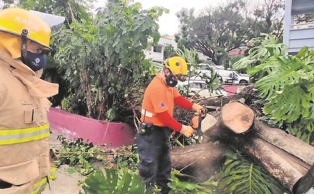 Lluvia salvaje tiró árboles y provocó aterradores encharcamientos en Morelos
