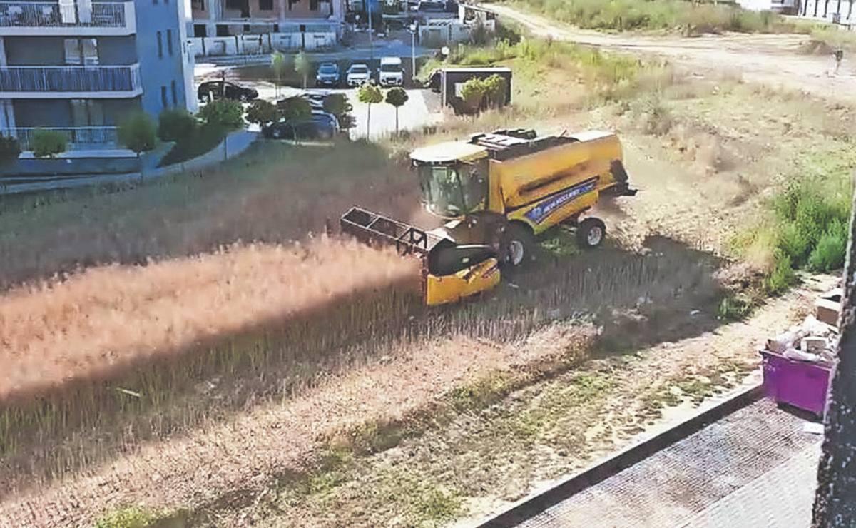 Un hombre se negó a vender su campo y ahora cosecha entre edificios, en Polonia