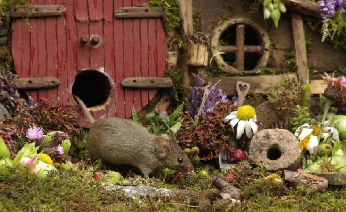 Fotógrafo descubre a familia de ratones en su jardín y les construye casitas de hobbits