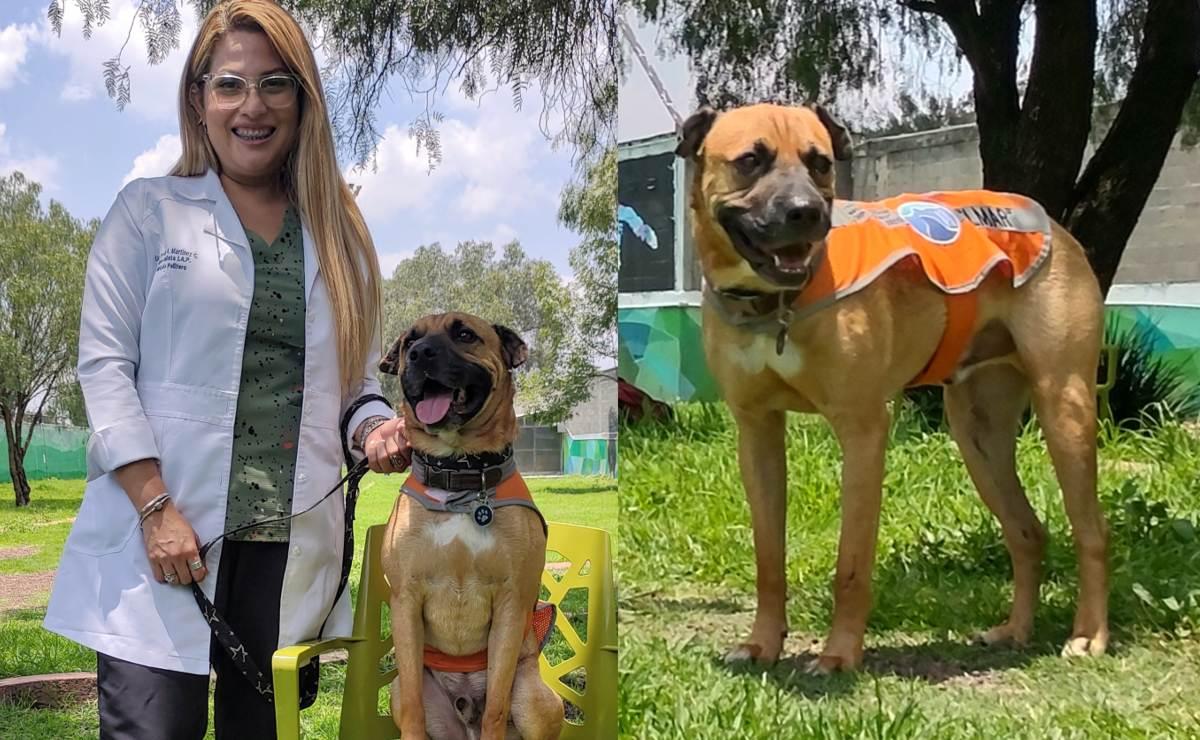 Elmar, el perro rescatado del Metro que ahora ayuda a niños con necesidades especiales
