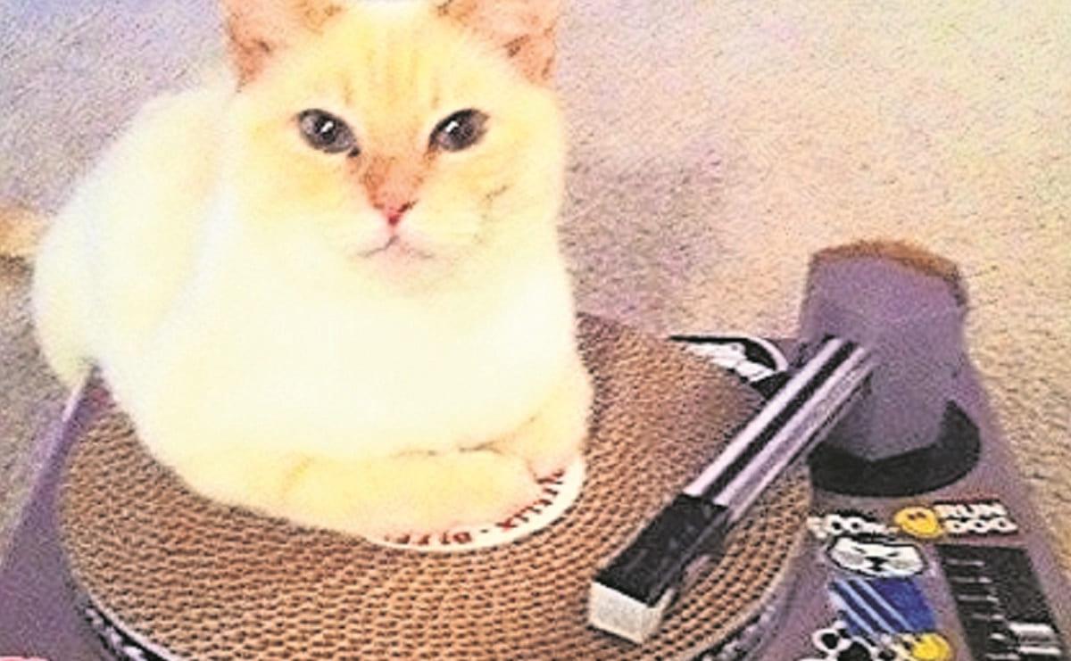 Gato deja sin dormir a su vecinos, pues enciende el equipo de música a todo volumen