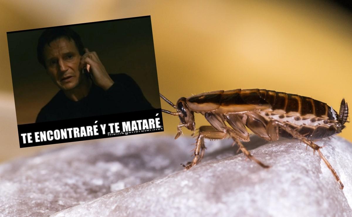 TikTok se vuelve viral por receta sencilla que extermina cucarachas y moscas