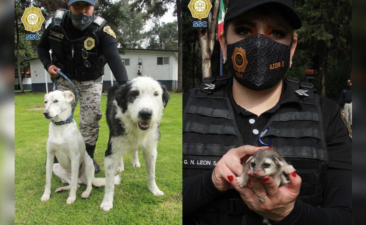 Brigada de Vigilancia Animal ha rescatado 364 animales en lo que va del año, en CDMX