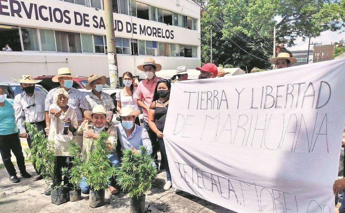 Habitantes de Tetecala 'alzan la mano' para producir mariguana en sus cultivos