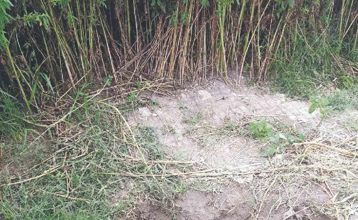 Encuentran cadáver semienterrado de una joven, al lado de la carretera Zumpango - Tecámac
