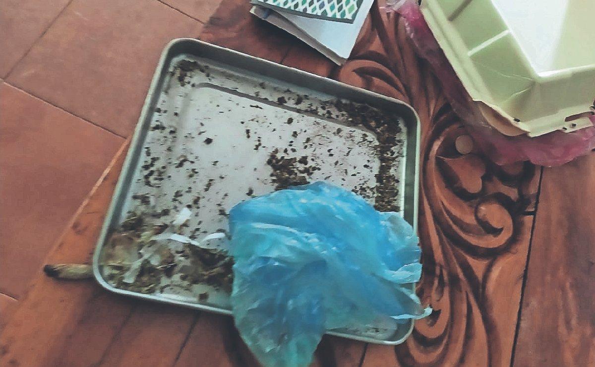 Tumban negocio de mariguana al asesinar a dos de sus representantes, en Tlayacapan