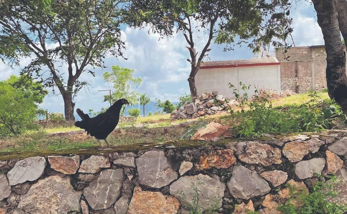 Deslave en cerro de Morelos desencadenó abandono masivo de animales de granja