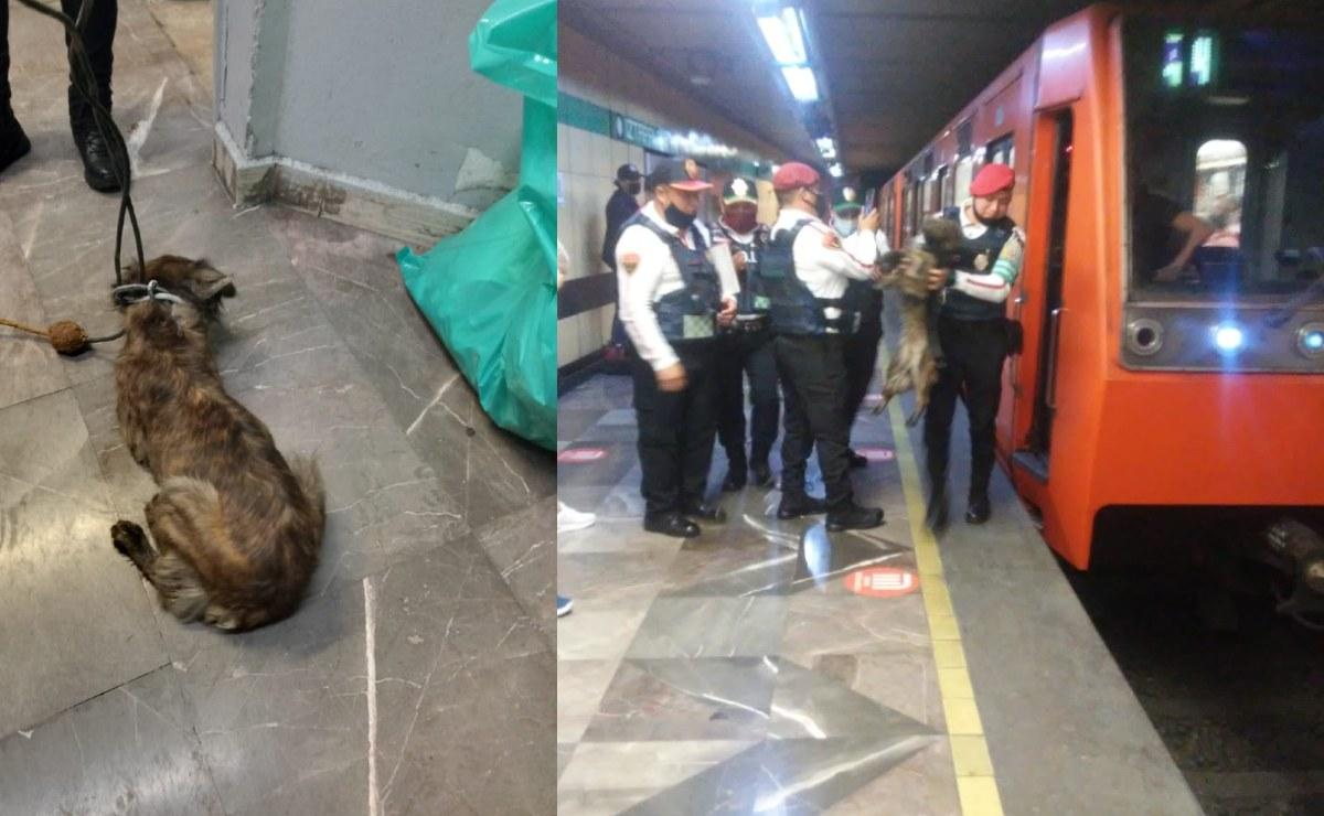 Rescatan a perrito de vías del Metro en la interestación Iztapalapa - Cerro de la Estrella