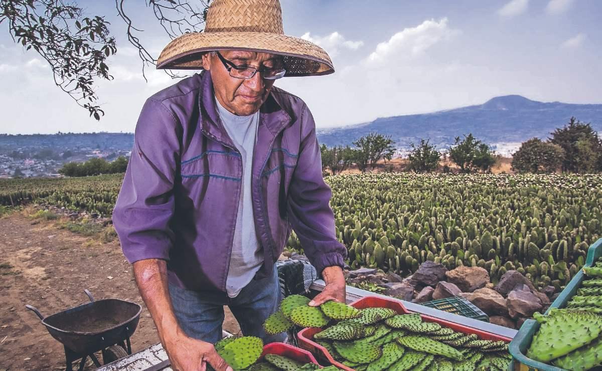 Claudia Sheinbaum entrega apoyo histórico para trabajadores del campo, en Milpa Alta