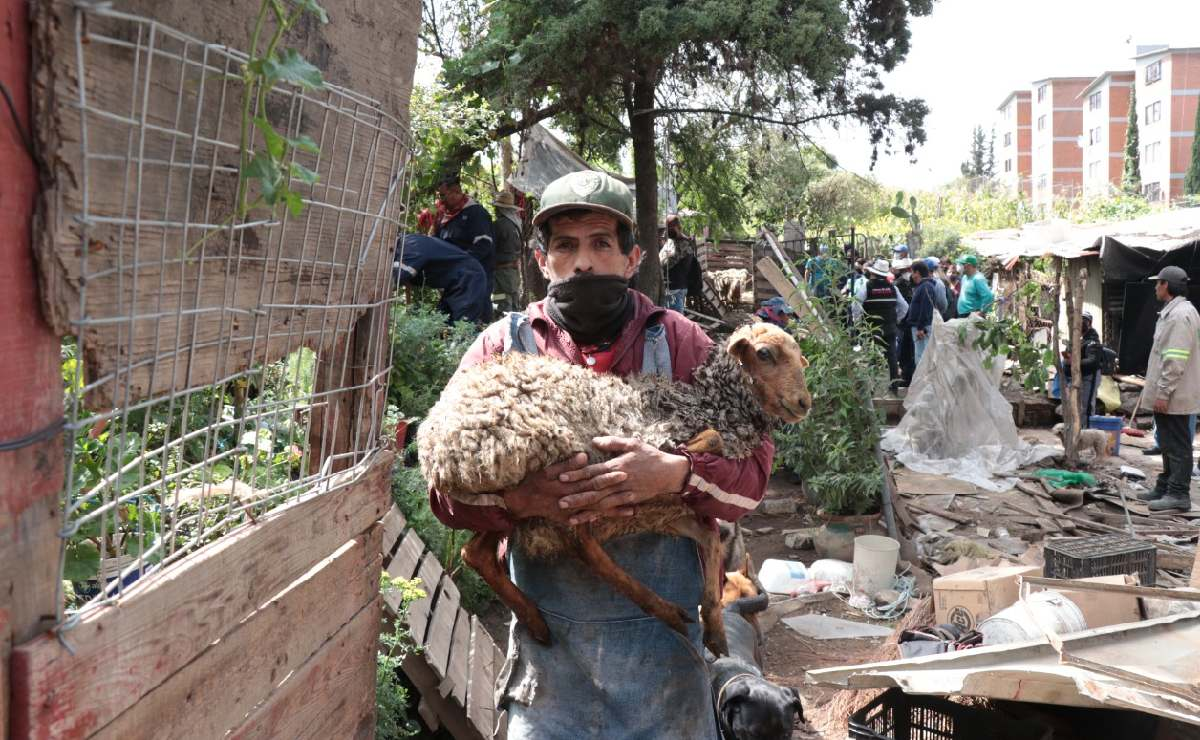 Derriban casas de 10 familias en Iztapalapa, denuncian que no les avisaron y hasta granja tenían