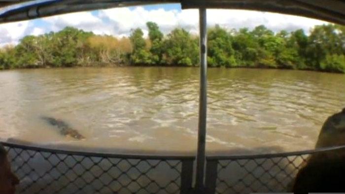 Cocodrilo ataca a guía de turistas en un barco | VIDEO