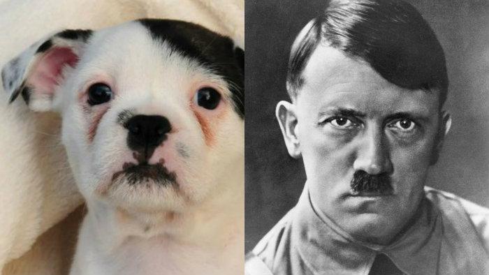 Perro que se parece a Hitler