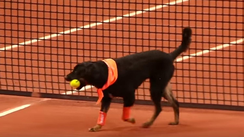 Perros recoge pelotas (Foto cortesía YouTube)