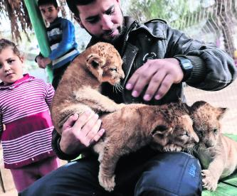 Garras leona Palestina