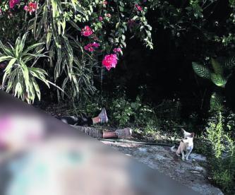 Matan a mujer Disparos Plomazos Morelos