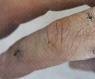 ahuyenta mosquitos el grafico