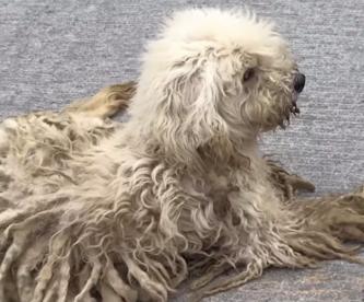 Lolo un can abandonado