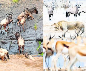 Subastarán animales por sequía en reservas y parques nacionales de Namibia