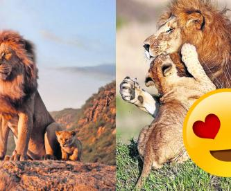 Captan a Mufasa y Simba y conmociona las redes sociales