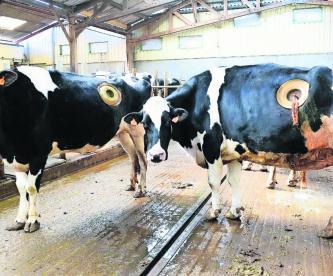 Vacas Hoyo en el lomo Ojo de buey Malas prácticas Francia