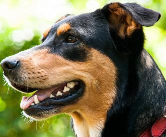 Envenenan perros Ecuador Quito Donan comida