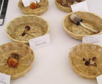 mueren indígenas chiapas hongos tóxicos