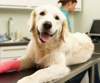 dia veterinario animales