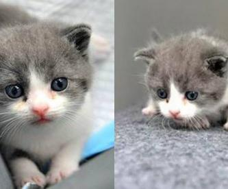 nace garlic primer gato clonado china