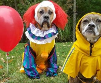 Todos tus perritos flotarán con este adorable disfraz
