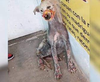 Aumentan reportes de maltrato animal contra perros y gatos en la capital del Edomex