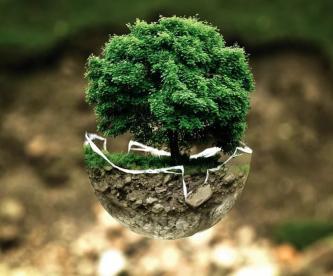 Día Mundial del Medio Ambiente, ¿qué podemos hacer para que nuestro hogar no colapse?