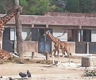 Mega asalto en zoológico de la CDMX, se llevan cable, herramientas y animales