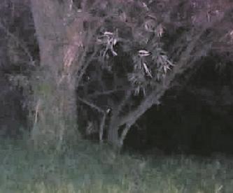 Vecinos hallan cuerpo de hombre maniatado con huellas de tortura en Edomex