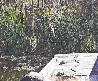 Encuentran cadáver de Juan en canal de Xochimilco, por comprar terreno a nieto del dueño