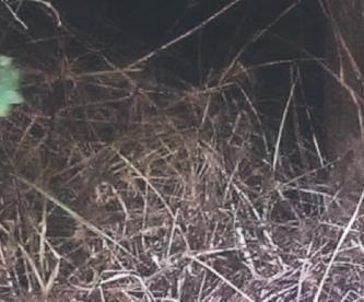 Ladrón muere al caer a barranca al ser sorprendido intentando robar una casa, en Morelos
