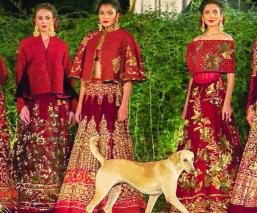 Perrito pasarela India modelo video