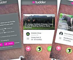 Reino Unido Tinder Tudder para toros y vacas