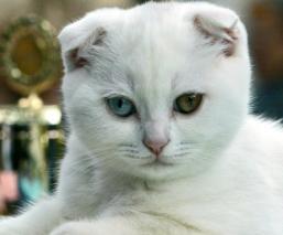 Gatos siete vidas explicación
