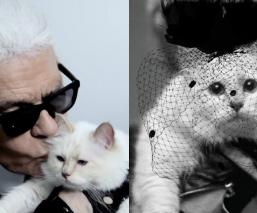 Karl Legarfeld Choupette Gatita nueva línea de moda