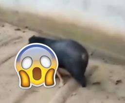 Se viraliza video de un hombre siendo atacado por un oso