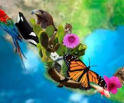 dia internacional de la diversidad biológica fecha por que se celebra 22 de mayo