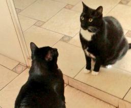 Reddit Gato y dos espejos