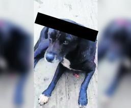 machetea perro violencia animal morelos
