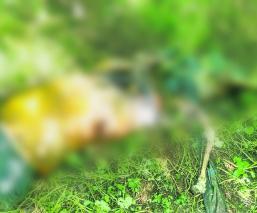 Campesino iba al baño y encuentra dos cadáveres en campos de cultivo en Morelos