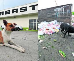 abandono de perros Toluca