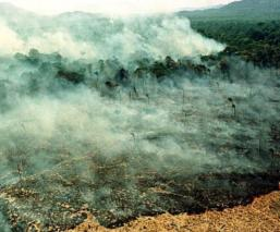 incendio amazonas la amazonia pray for amazonia